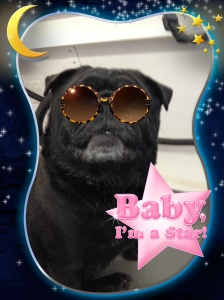 baby i'm a star
