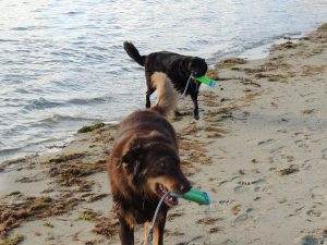 147 Owens Beach- Bailey & Gunner
