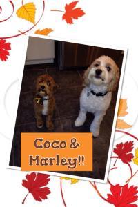 coco & marley